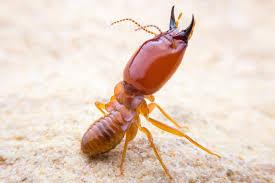 Pest Control Melbourne Termites